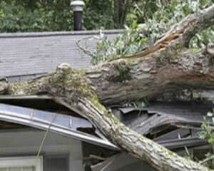 fallen tree on roof